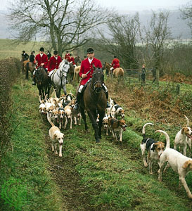 Fox hunt photo