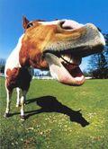 Paint horse comic